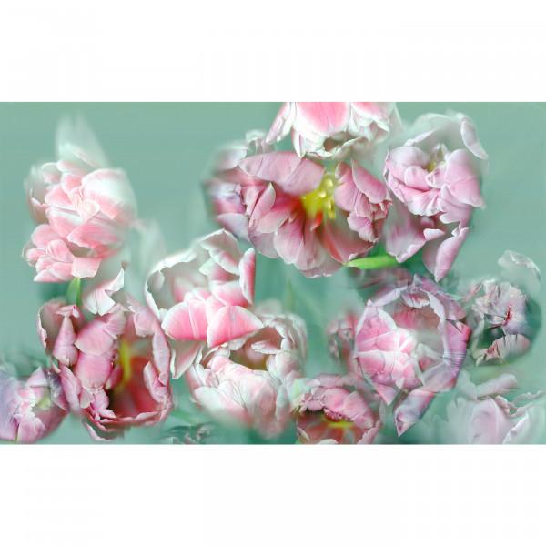 Tulpis by Silvii Fleur